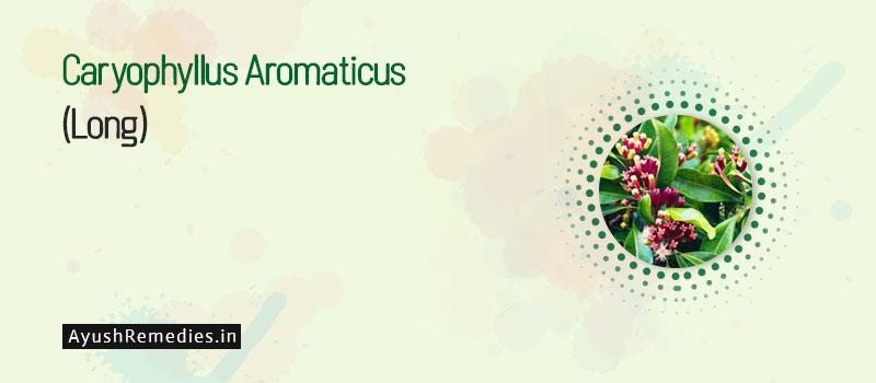 Caryophyllus Aromaticus (Long)