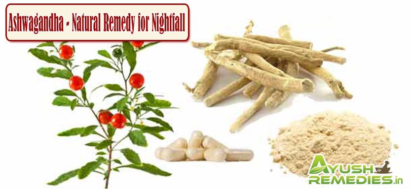 Ashwagandha Natural Remedy for Nightfall