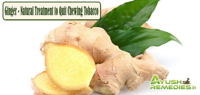 Ginger Natural Treatment to Quit Chewing Tobacco